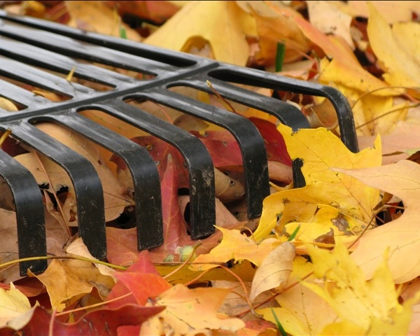 leaf raking_37764