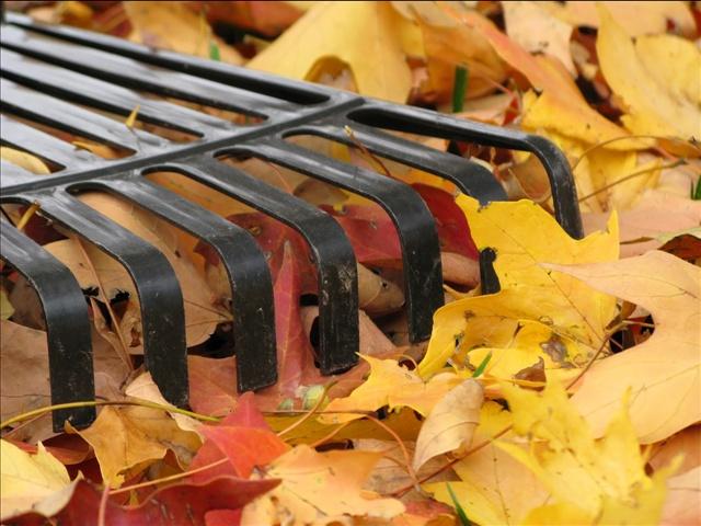 leaf raking_37764
