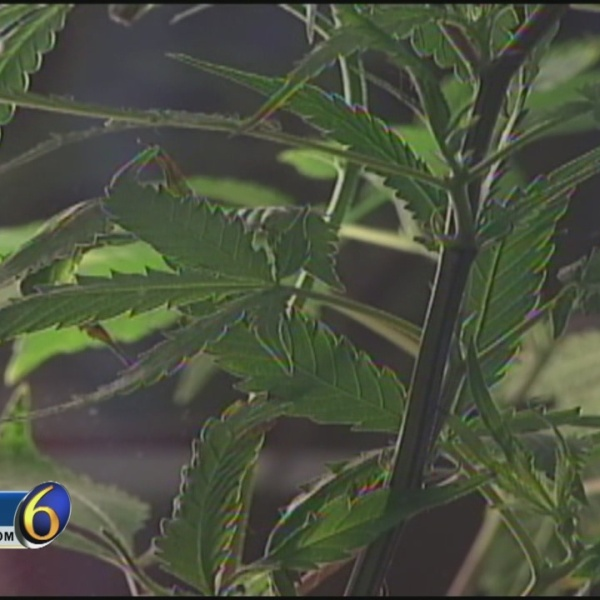 "East Lansing Still ""Hazy"" After Marijuana Vote"