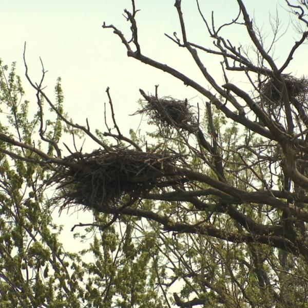 eagle nest_44288