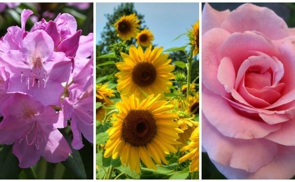 FlowersforMomCollage_44508