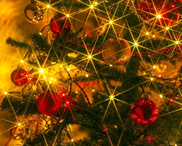 Christmas Tree_61492