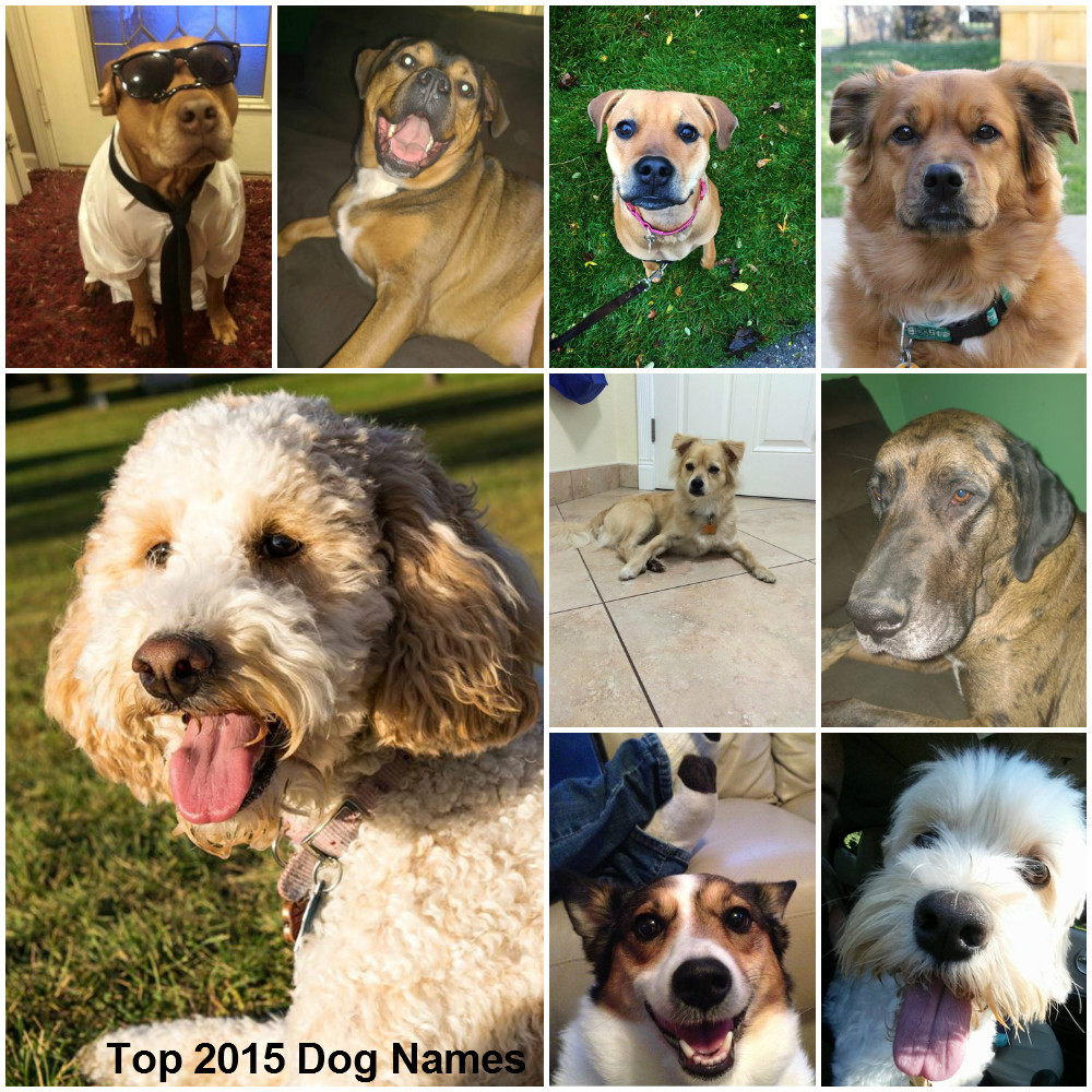 Top2015DogNamesFOTOR_122186