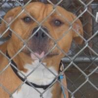Dog Cage_72141