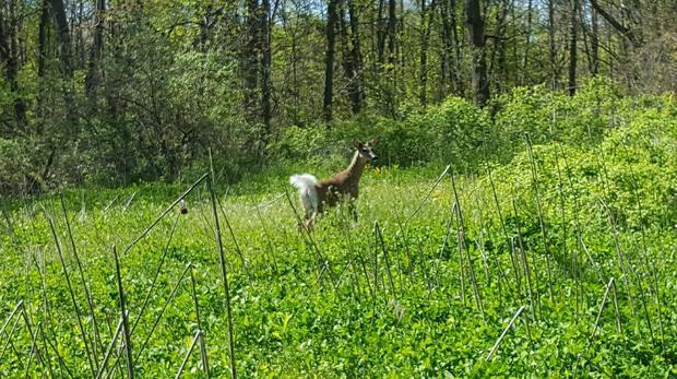 DNR deer_157040
