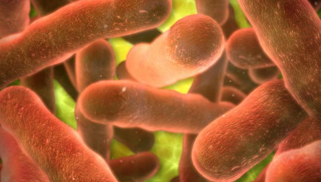 salmonella generic 072815_71043