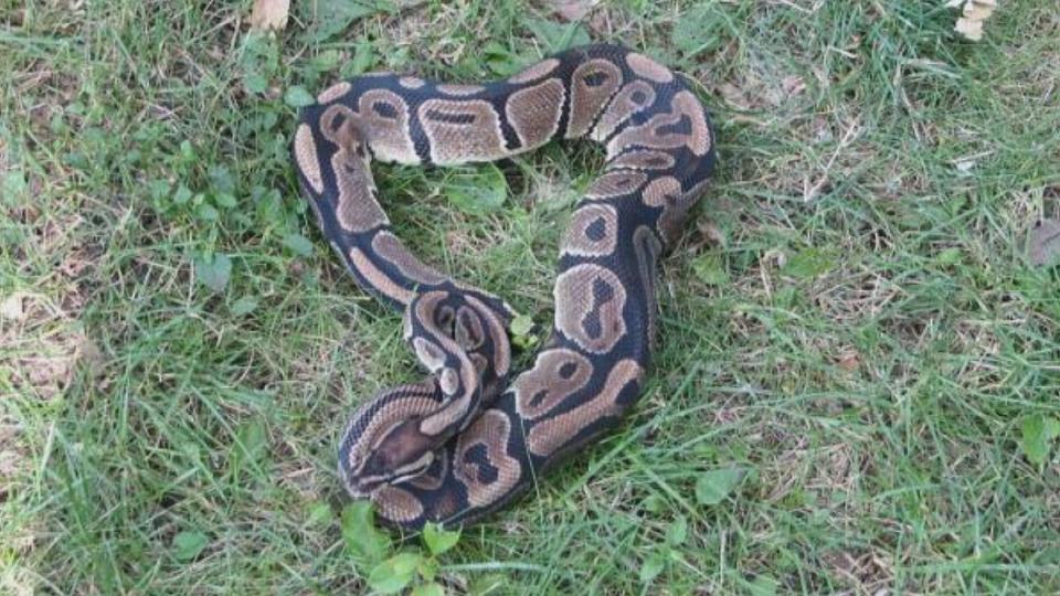 snake_164201