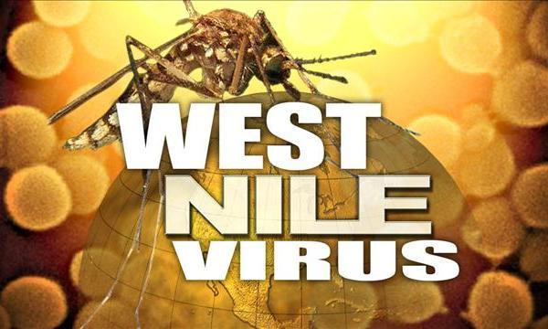West Nile virus_83234