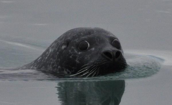 Seal_179662