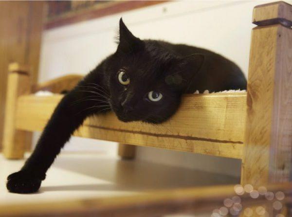 black-cat_225673