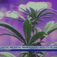 Gigantic medical marijuana facility planned