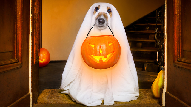 Halloween Ghost Dog Trick Or Treat_330412