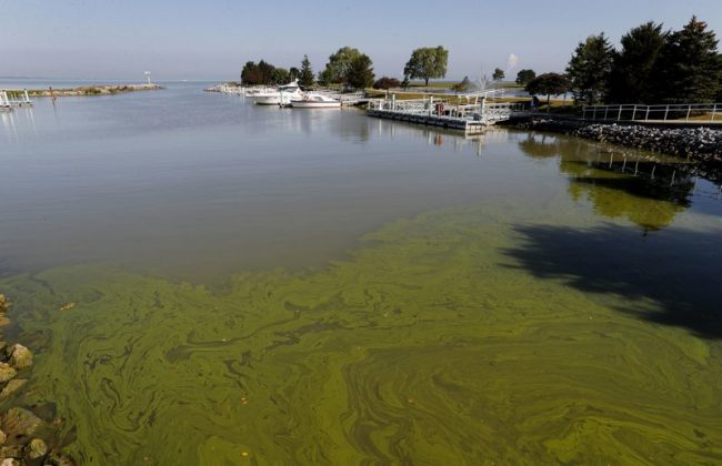 algae_338347