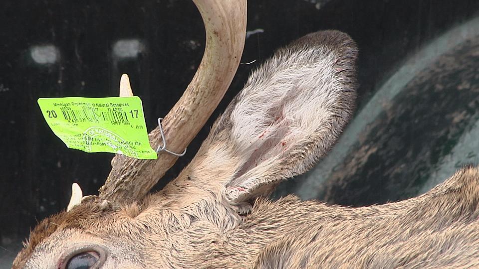 deer season_338215