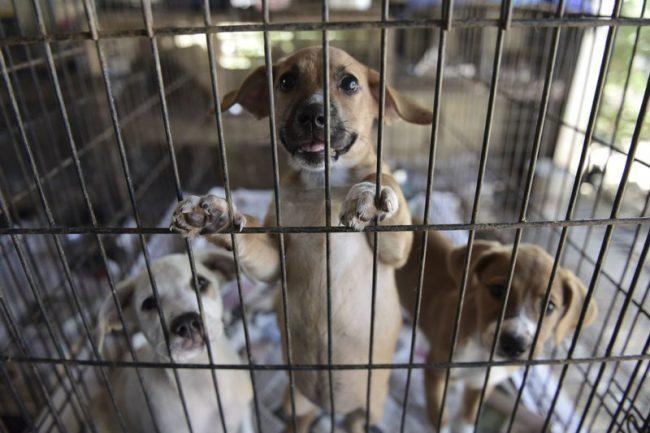 Ingham County Animal Shelter Halloween 2020 Ingham County Animal Control and Shelter hosts vaccine clinic