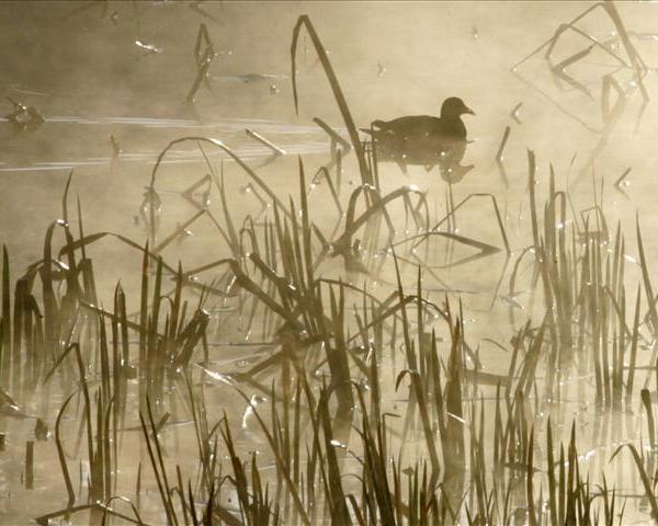 Wetlands_375864