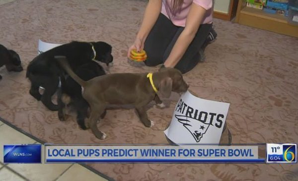 Puppy predictions_366647