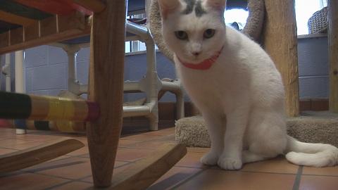 cat (2)_1521044401338.jpg.jpg