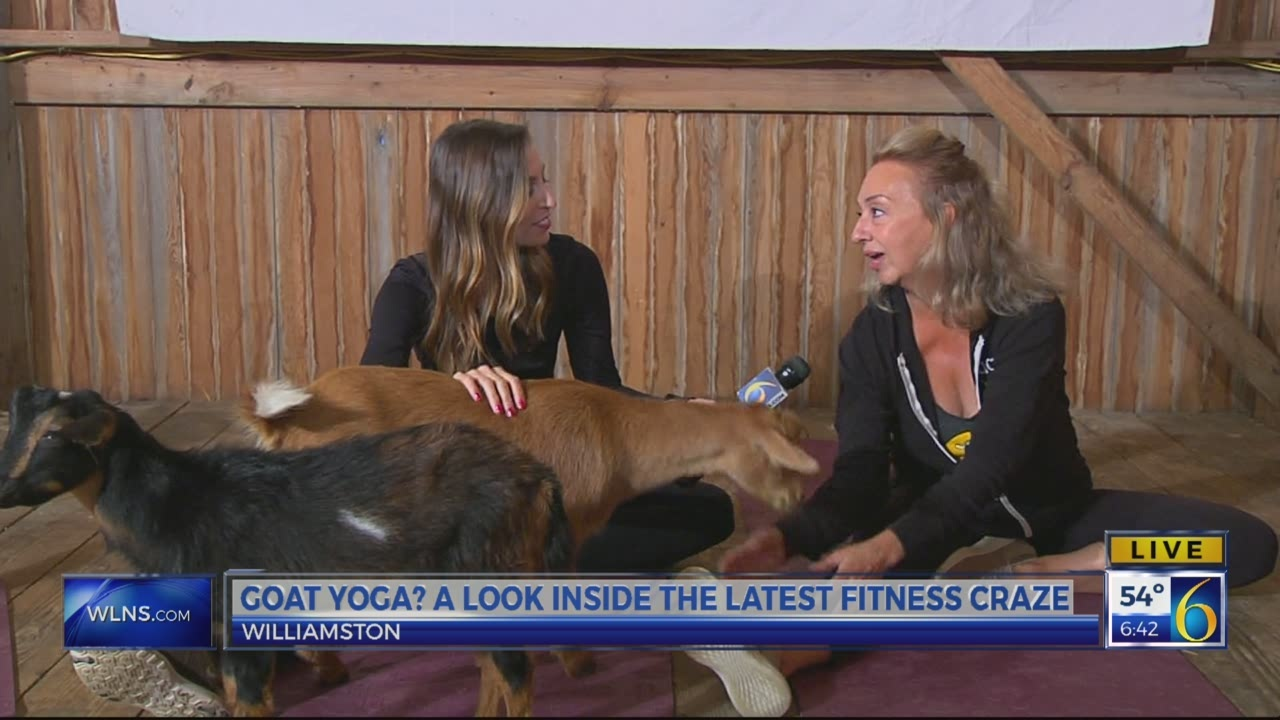 6 News This Morning: goat yoga