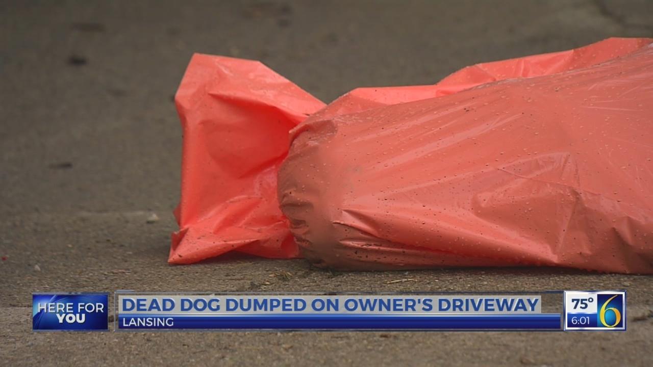 Dead dog dumped on owner's driveway in Lansing