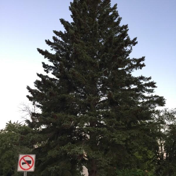 Xmas tree 2018_1537886446124.jpg.jpg