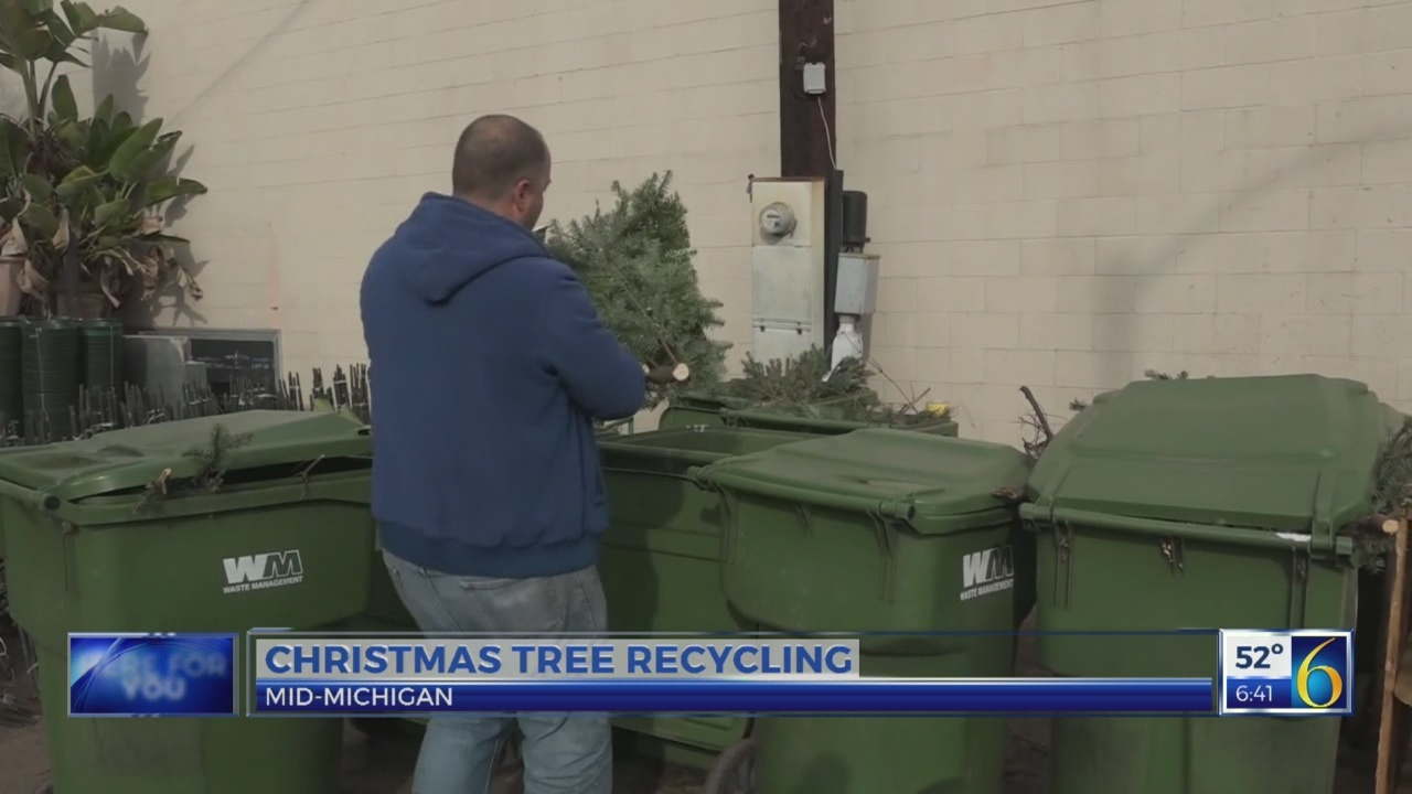 6 News This Morning: christmas tree recycling