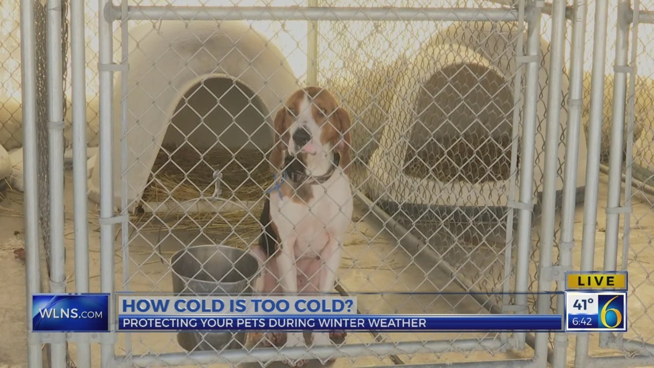 6 News This Morning: winter weather pets