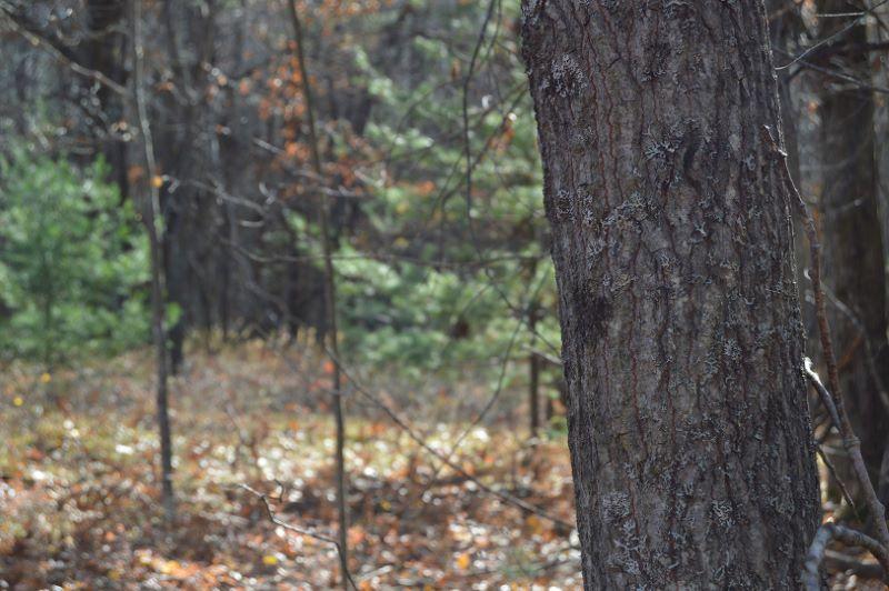 Forest_1553536522482.jpg