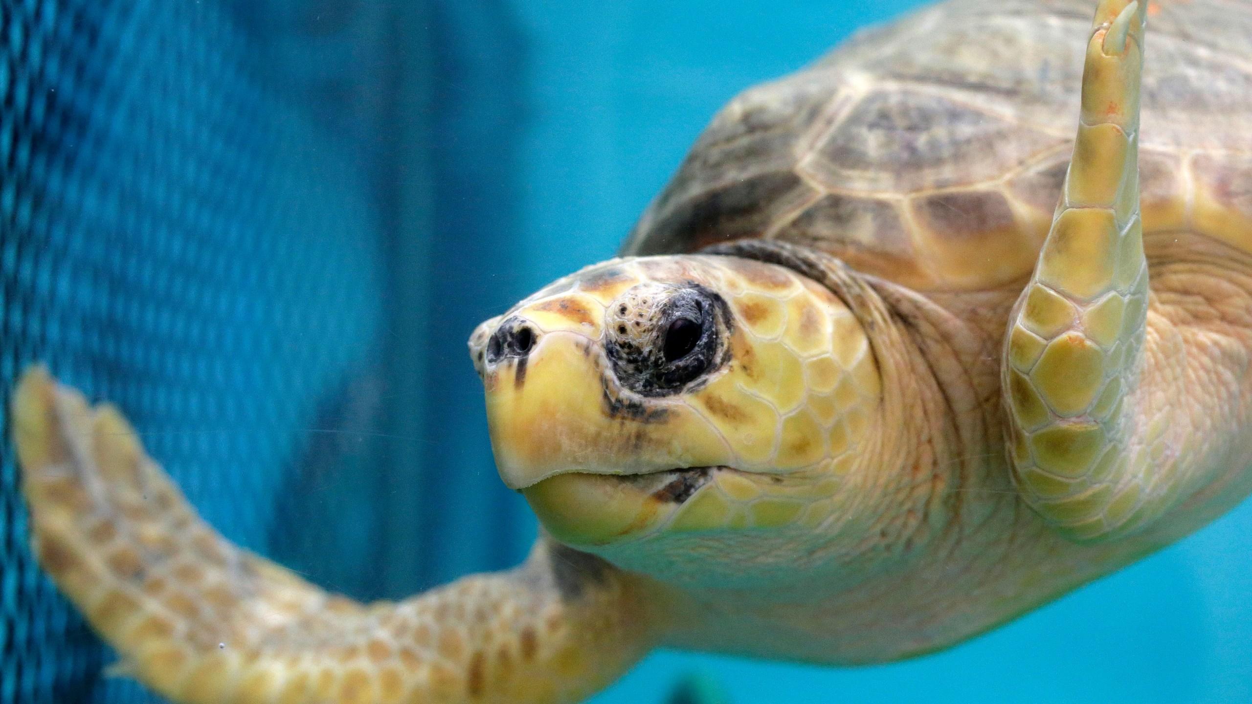 Beached_Turtles_23600-159532.jpg81110766
