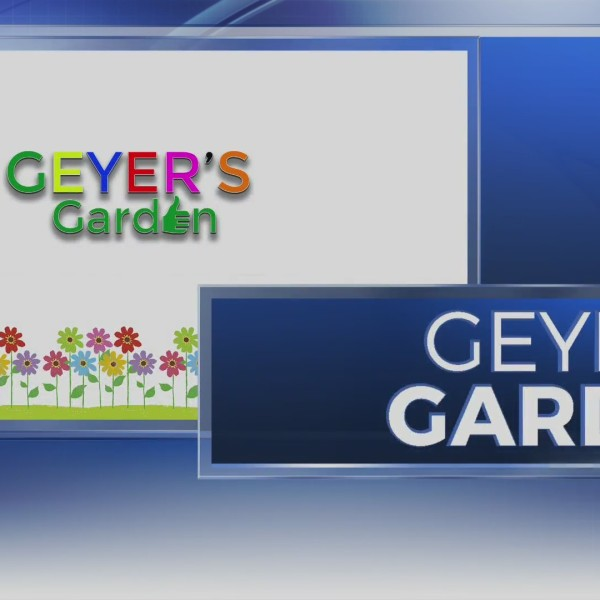 Geyer's Garden: Tending your lawn during a rainy spring