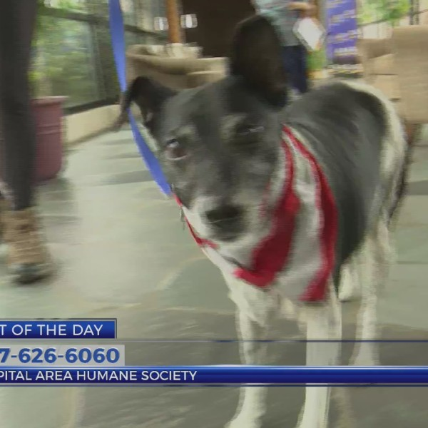 Pet Of The Day May 29