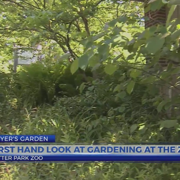 Geyer's Garden: First hand look at gardening at the zoo