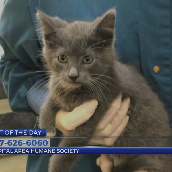 Pet Of The Day June 10