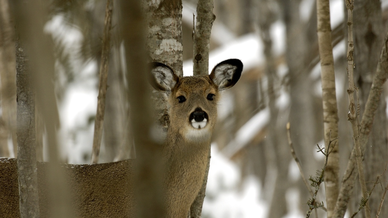 How Michigan Is Fighting Cwd With Research Education And