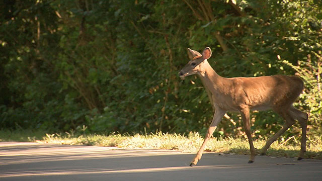 Michigan ranks #2 in vehicle collisions with animals ...