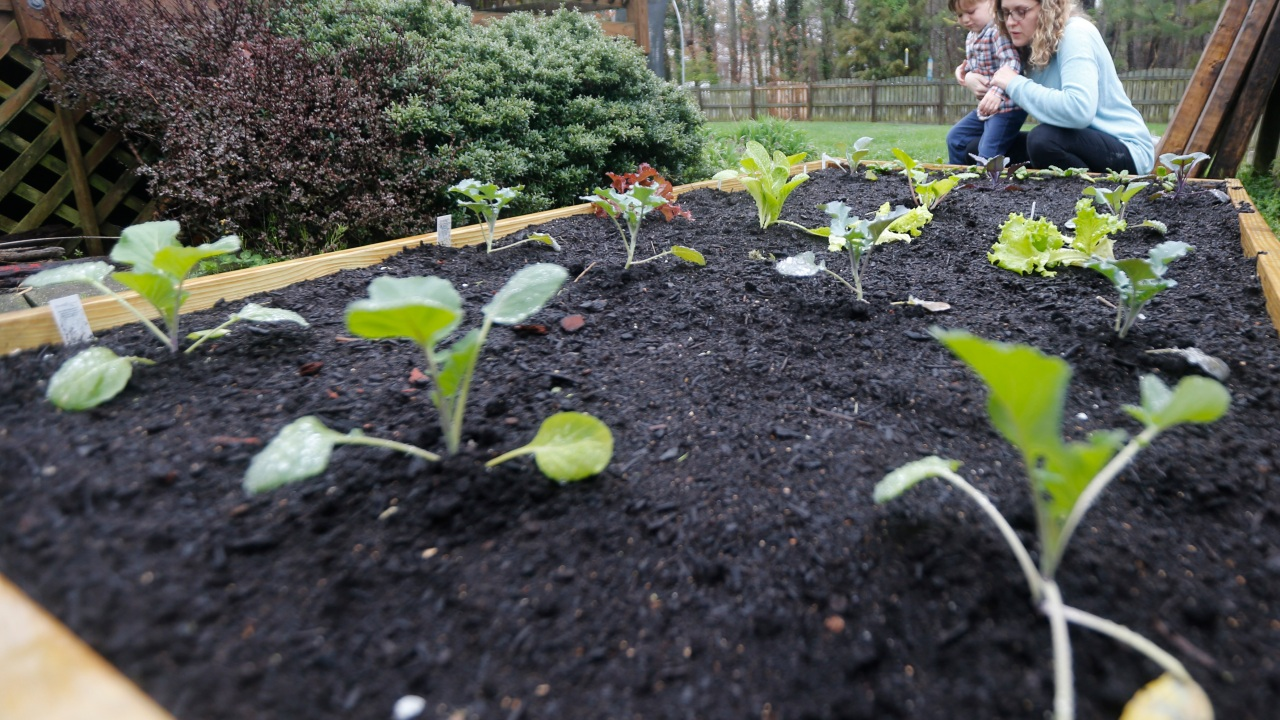 MSU's free virtual classes on gardening and houseplants are green-thumb therapy