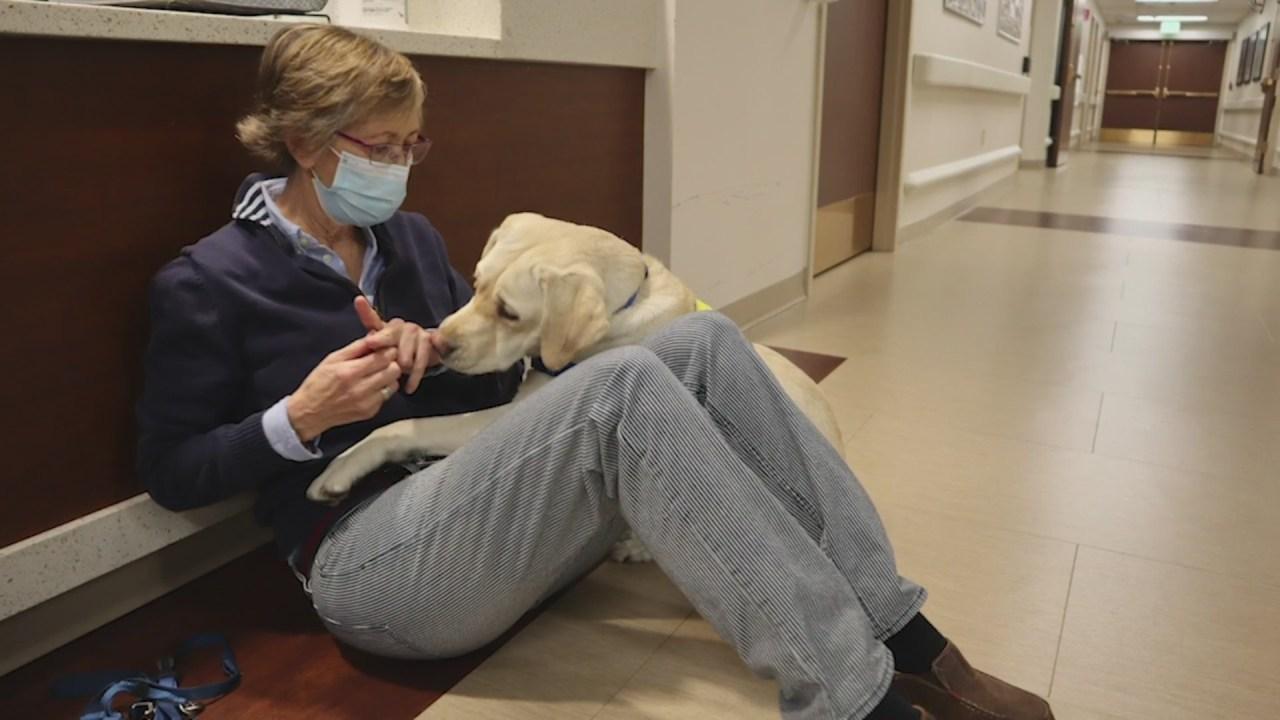 Legal Edge: Service animals vs emotional support animals